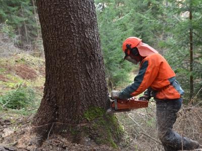 Personale con esperienza nel settore boschivo